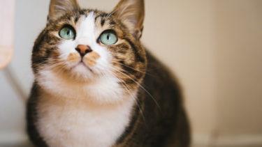 愛猫を外出中にスマホでチェック出来るの?